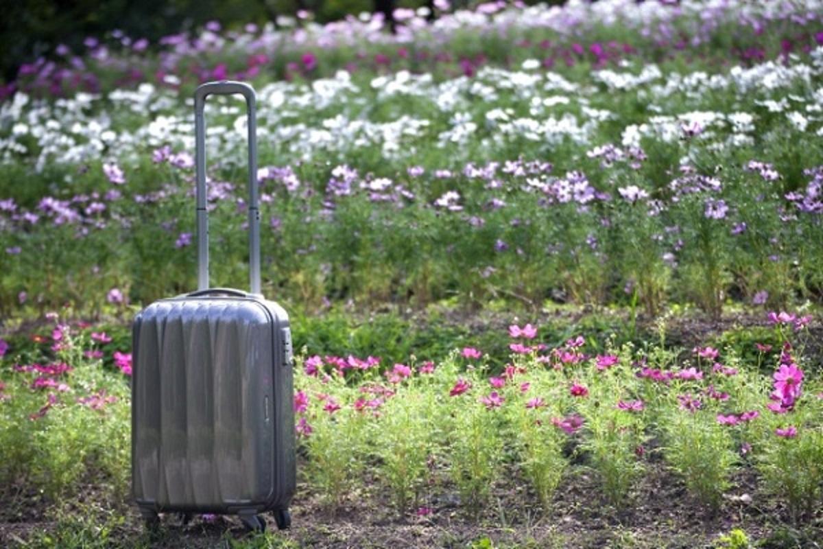 お花畑とスーツケースの画像