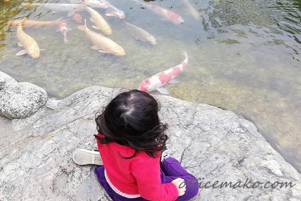 池の鯉を見ている女の子の画像