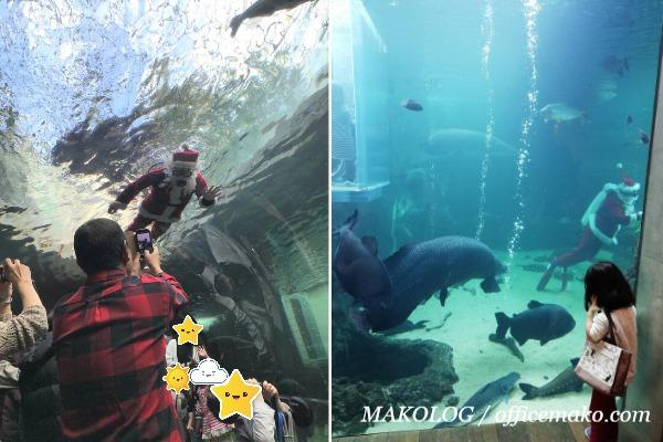 魚と一緒に泳ぐサンタの画像