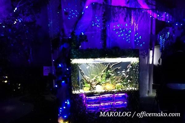 暗闇の中にある水槽の画像