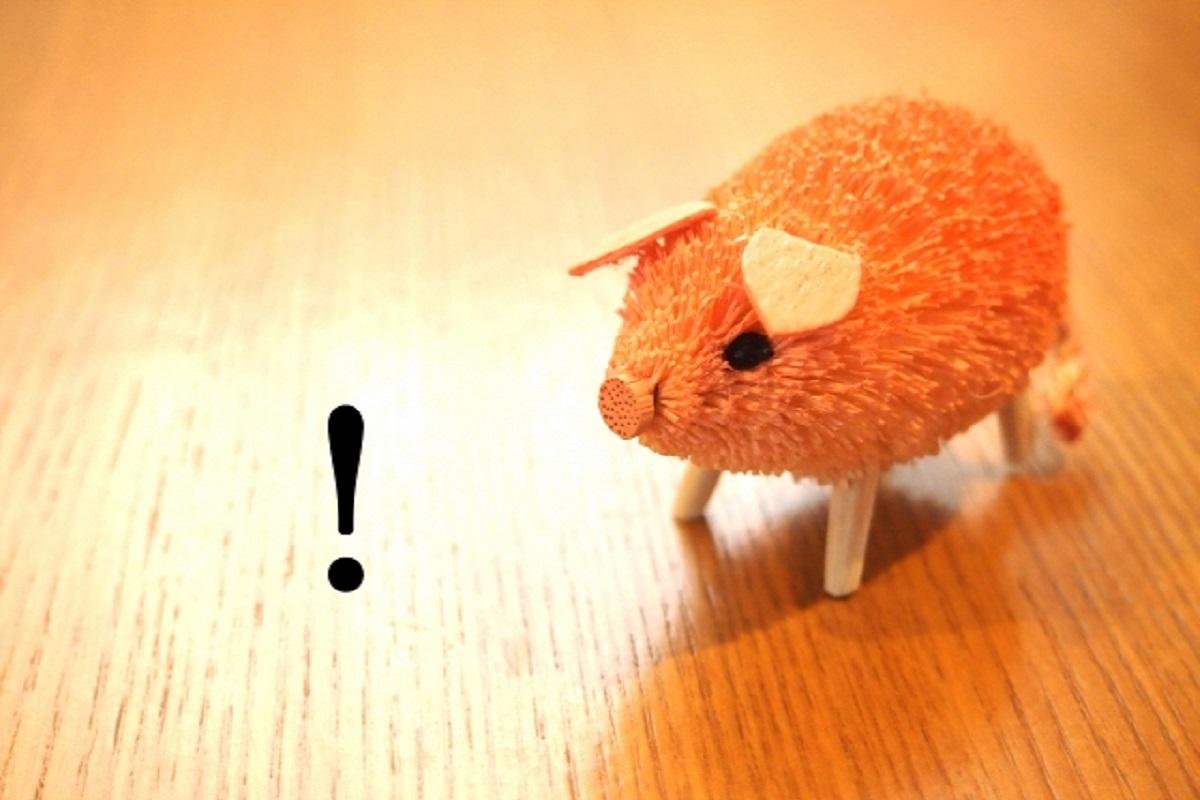 驚いている豚の画像