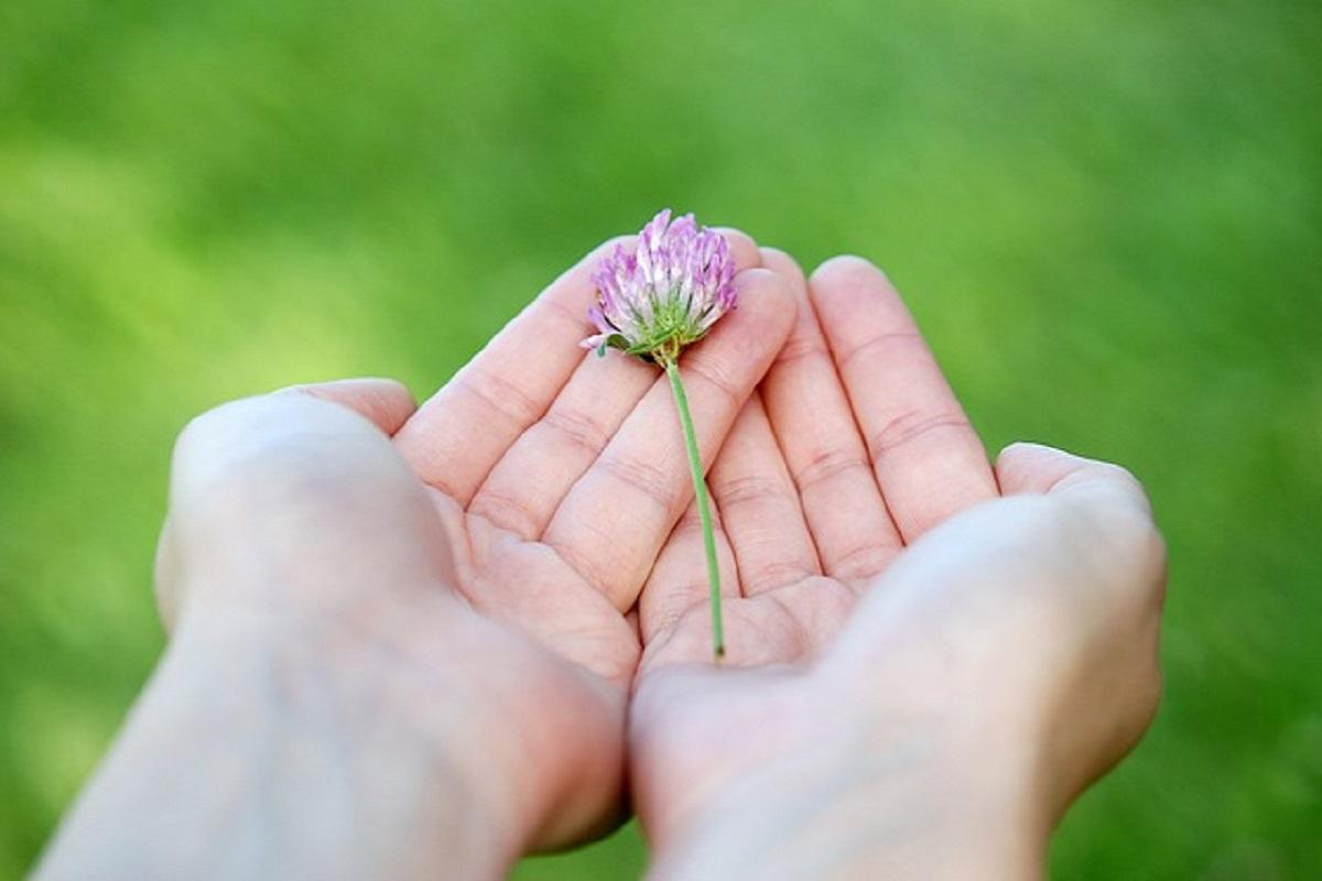 小さな花を両手で持っている画像