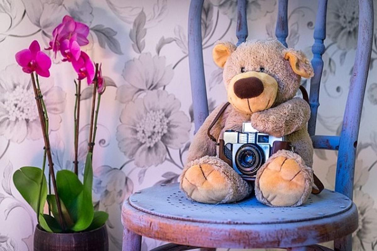 くまのぬいぐるみがカメラを持っている写真